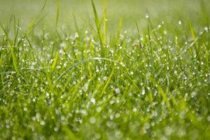 Rasenpflege Die Besten Tipps Tricks Für Einen Schönen Rasen