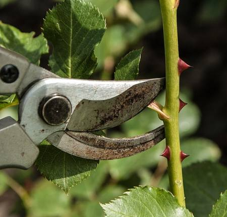 Gartenschere testen