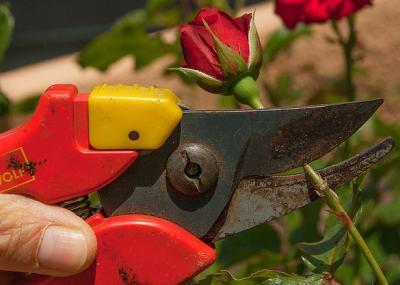 beste Gartenschere Test