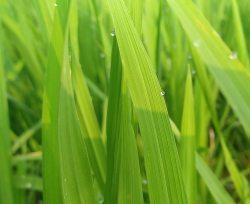 Rasen Schnittlaenge