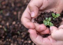Garten Adventskalender Saatgut